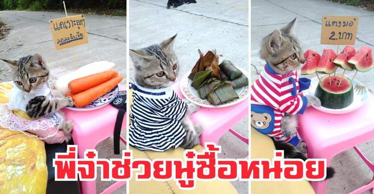 พบกับน้อง 'บ่งบ๊ง' แม่ค้าผัก ผลไม้ แถมใจบุญใส่บาตร ที่กำลังกลายเป็นขวัญใจเหล่าทาสแมว