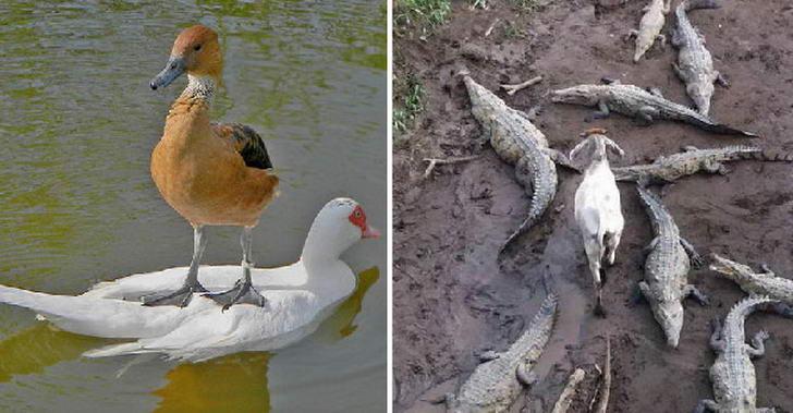 20 ภาพสัตว์โลกสายเกรียนที่ไม่สนใจโลก และโนแคร์ทุกสิ่งรอบตัว