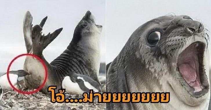 28 โมเม้นท์ฮากลิ้งและหาดูยากของเหล่าสัตว์โลก ที่จะทำให้ยิ้มแบบไม่รู้ตัว
