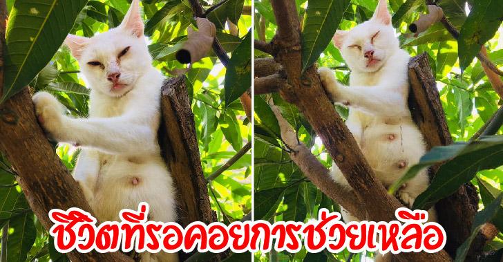 ชีวิตแม่แมวท้องแก่ที่เอาตัวรอดเพียงลำพัง หวั่นใจอาจไม่รอดถ้าไม่มีคนช่วย