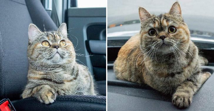 รู้จักแมวรถบรรทุก 'โทร่า' ที่ออกเดินทางไปทั่วประเทศกับทาสรู้ใจ