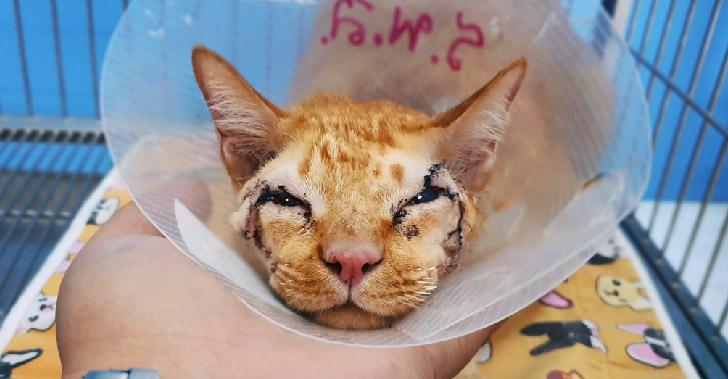 หนุ่มใจดีรับเลี้ยงแมวส้มไร้หนังตา ช่วยผ่าตัดเปิดตามองโลกกว้าง หลังโดนขนทิ่มมานานเกือบ 3 ปี