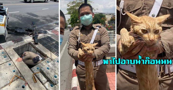 ตำรวจช่วยแมวส้มตกท่อ แต่ชาวเนตกลับโฟกัสหน้าน้องแทน ด้านผู้กำกับจะรับเป็นแมวประจำโรงพัก
