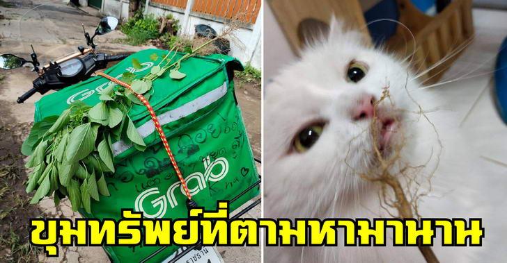 หนุ่มแกร๊บทาสแมว ตามหาขุมทรัพย์จนเจอ เอาไปปรนเปรอเจ้านายเคลิบเคลิ้มไปตามระเบียบ