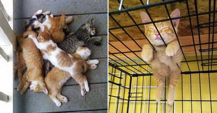 17 โมเม้นท์น่ารักๆของแมวเหมียว ที่นอนหลับได้ทุกที่ทุกเวลา