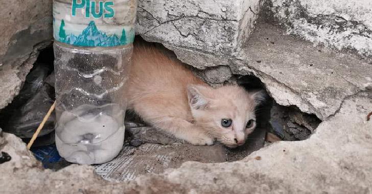 ลูกแมวส้มโดดเดี่ยวในซอกหลืบ ได้รับโอกาสครั้งที่สองจากหนุ่มใจดี