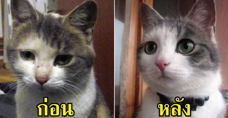 15 ภาพสัตว์ไร้บ้านก่อน-หลังถูกรับเลี้ยง ที่ใบหน้าแสดงถึงความเศร้า-ความสุขได้อย่างชัดเจน