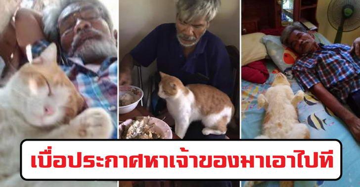 คุณพ่อเคยบอกไม่ให้เลี้ยงแมว ปัจจุบันกลายเป็นทาสยิ่งกว่าทาสแมว