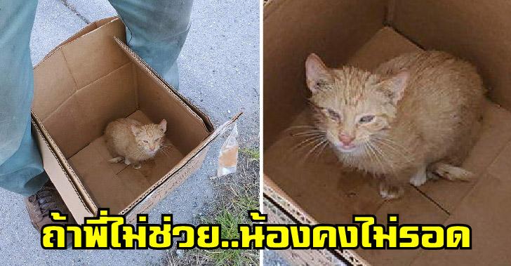 คนงานเก็บขยะพบลูกแมวถูกยัดใส่กระเป๋า ก่อนที่จะช่วยน้องให้ได้รับโอกาสครั้งที่สองในชีวิต