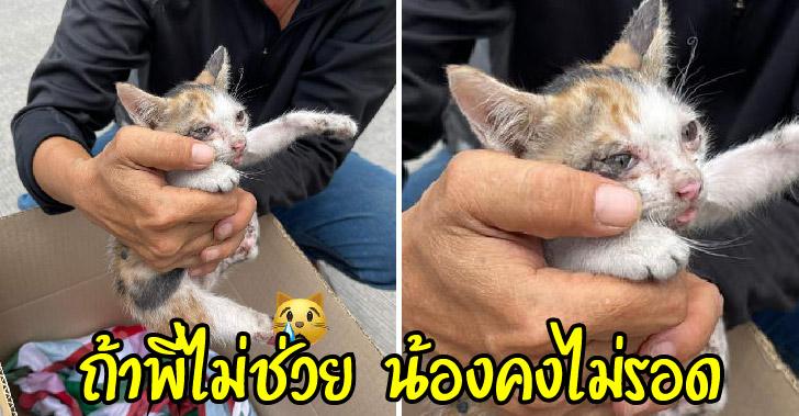 ลูกแมวขาหายไปข้าง วิ่งส่ายไปมากลางถนน จนพลเมืองดีสังเกตเห็น หยุดรถลงไปช่วยไว้ได้ทัน