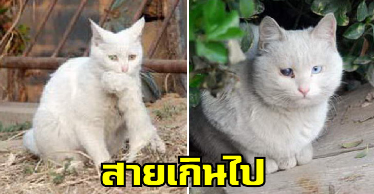 แม่แมวจรหนีไปออกลูกลำพัง แม้พ่อแท้ๆยังไม่ให้เข้าใกล้ จนทุกอย่างสายเกินไป