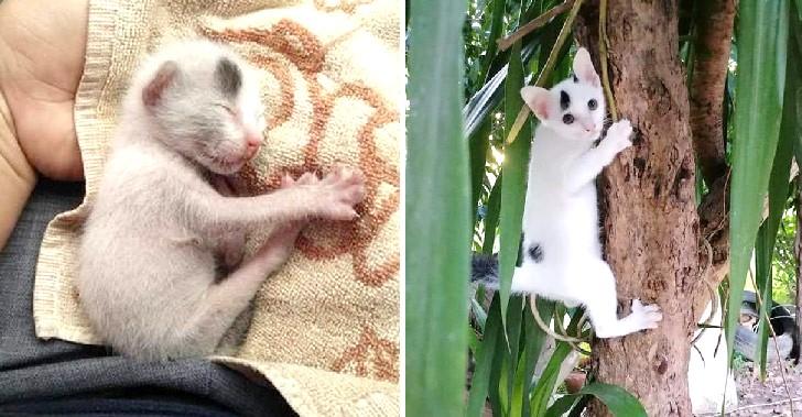 เก็บลูกแมวมาเลี้ยงจากถนนสี่เลน ผ่านไปสองเดือน น้องกลายเป็นลิงแทนแล้ว