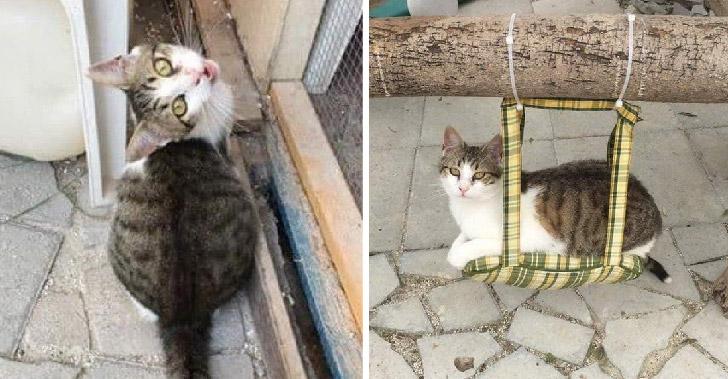 ลูกแมวโดดเดี่ยวในศูนย์พักพิงสัตว์นานสามปี ก่อนได้พบรักแท้จากชาวต่างชาติ