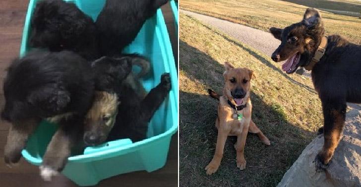 น้องหมาตื่นเต้นสุดขีด หลังได้เจอพี่น้องที่พลัดพรากด้วยความบังเอิญ
