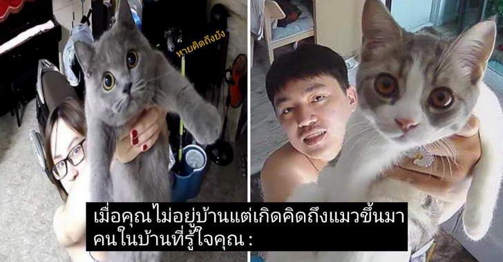มัดรวมความเฮฮากล้องวงจรปิดทาสแมว ที่ติดไว้ดูแมวโดยเฉพาะ