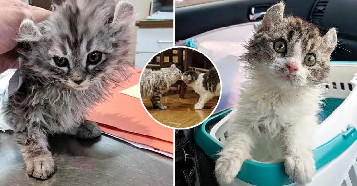 แมวขนหยิกถูกช่วยจากข้างถนน และได้พบกับพี่น้องที่พลัดพรากด้วยความบังเอิญ