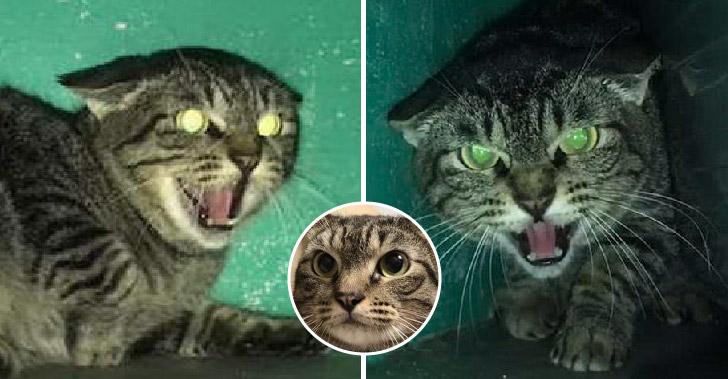แมวไร้บ้านไม่ยอมให้ใครแตะตัวนานเป็นปี ก่อนจะใจอ่อนเพราะเจอลูกตื้อสุดจะต้าน