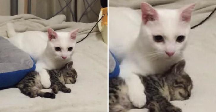 ลูกแมวลายสลิดเข้าบ้านวันแรก เจ้าถิ่นก็ต้อนรับอย่างดุดัน ก่อนจบแบบแฮปปี้เอนดิ้ง