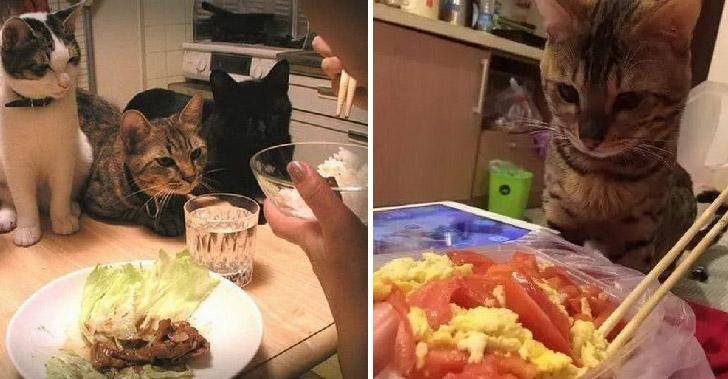 ช่วงเวลากินอาหารของทาสแมว ที่เจอความกดดันขั้นสุดจากเจ้าเหมียว