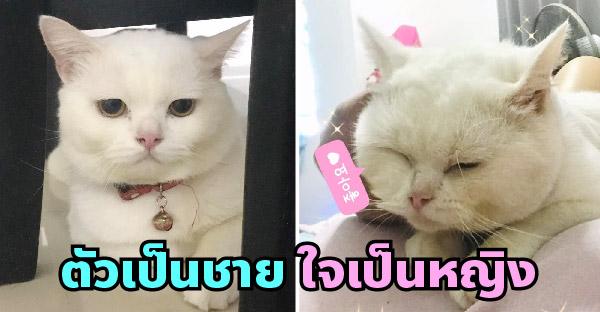 สาวเลี้ยงแมวมาตั้งแต่น้อย เพิ่งรู้ว่าน้องมีกายเป็นชายแต่ใจเป็นหญิงก็ตอนโตแล้ว