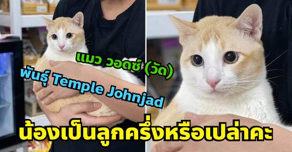 สาวช่วยแมวจรจากข้างถนน สงสัยเป็นแมวพันธุ์ แต่คำตอบชาวเนตทำเอาฮาลั่น