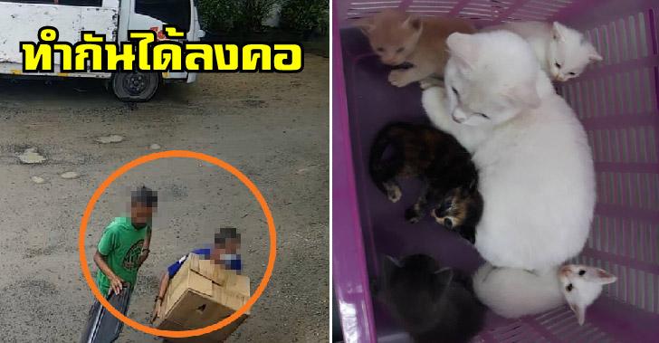 แม่แมวและลูกถูกจับยัดใส่กล่องนำมาทิ้งทั้งครอบครัว ก่อนเจ้าหน้าที่ซอยด๊อกเข้าช่วยเหลือได้ทัน