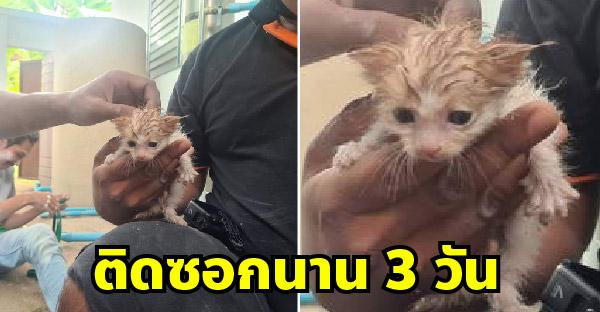 มูลนิธิช่วยลูกแมวพลัดตกจากหลังคา และติดซอกข้างตึกนานกว่า 3 วัน