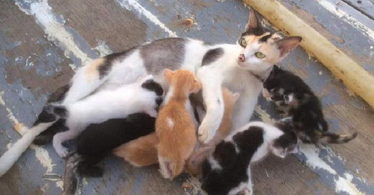 ไต๋เรือทาสแมวช่วยชีวิตครอบครัวแมวจรจัด ที่แอบมาออกลูกบนเรือประมงด้วยความบังเอิญ