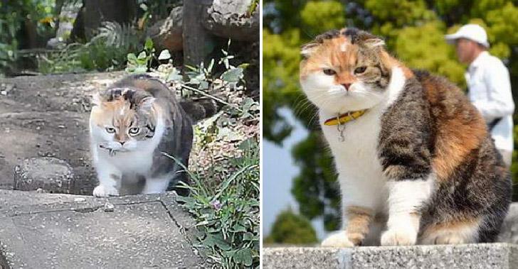 เจ้าของพาแมวเดินขึ้นเขาหวังช่วยฟิตหุ่น ปรากฎน้ำหนักน้องพุ่งไม่หยุดตลอด 7 ปี