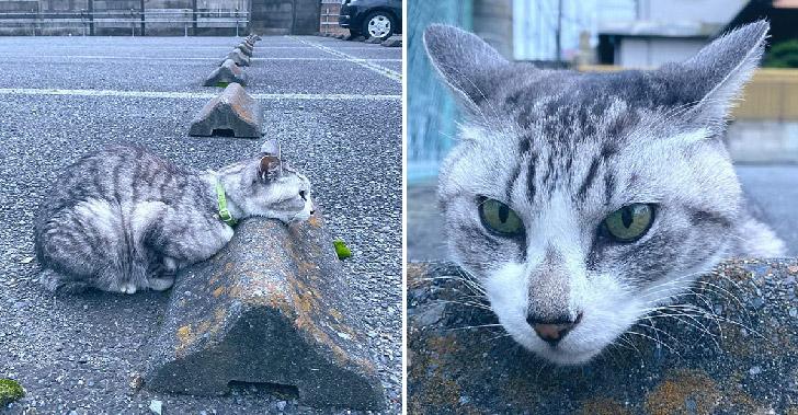 ความเฮฮาของเหล่าแมวเหมียวที่ใช้ที่กั้นจอดรถ ให้กลายเป็นหมอนใบโปรด