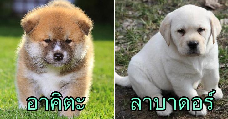 12 สายพันธุ์สุนัขที่ซื่อสัตย์ และภักดีต่อเจ้าของมากที่สุด