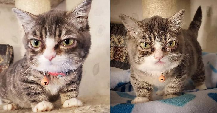 ลูกแมวแคระได้รับการช่วยเหลือ ถึงแม้จะแปลกตาไม่เหมือนใคร