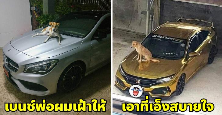 เหล่าหมาแมวเจตนาบริสุทธิ์ ที่ขึ้นไปนอนบนรถแบบไม่ถามสุขภาพกันซักคำ