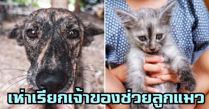 พี่หมาแสนรู้เห่าเรียกเจ้าของ ให้ไปช่วยลูกแมวตกคูน้ำได้ทันเวลา