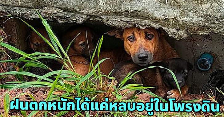 ครอบครัวสุนัขจรจัดไร้ที่กำบังฝน ส่งสายตาขอความช่วยเหลือ หวังมีบ้านสักครั้งในชีวิต