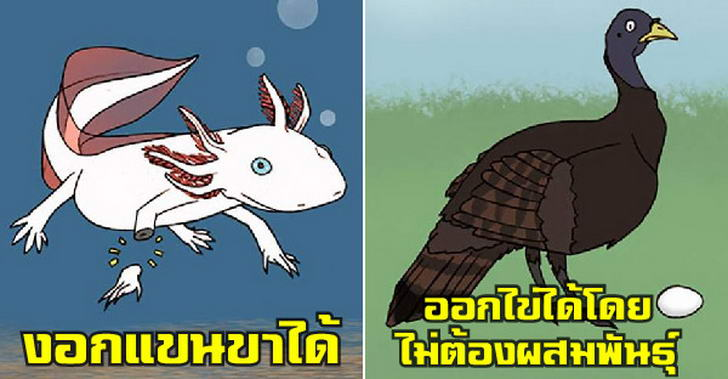เรื่องแปลกแต่จริงของสัตว์โลก ที่ทำให้ประหลาดใจได้เสมอ