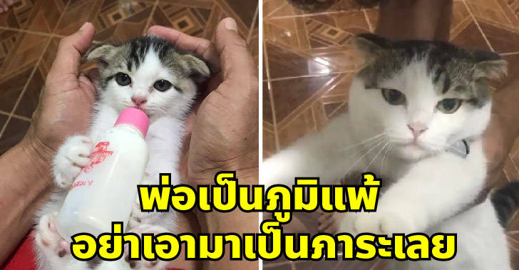 คุณพ่อขอร้องอย่าเลี้ยงแมวเพราะเป็นภูมิแพ้ แต่พอเลี้ยงจริงกลับกลายเป็นทาสยิ่งกว่าใคร