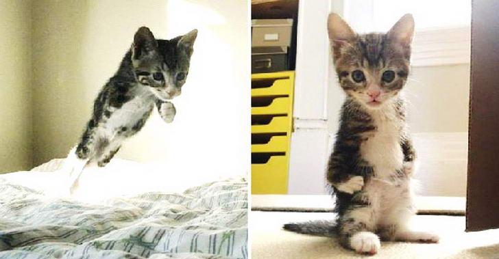 ลูกแมวพิการขาหน้าหวิดโดนการุณยฆาต ก่อนถูกช่วยเหลือจนโตขึ้นเป็นแมวเหมียวสุดเท่