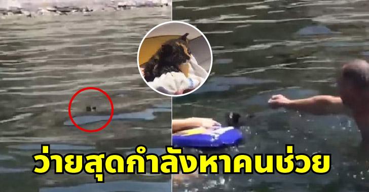 ลูกแมวกระโดดลงทะเล พยายามว่ายไปหานักท่องเที่ยว เพื่อขอความช่วยเหลืออย่างทุลักทุเล