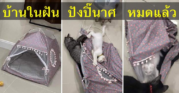 หนุ่มโอดประหยัดเงินเพื่อซื้อบ้านให้แมว กลับเจอความปัง…ปังปิ๊นาศไปหมดแล้ว