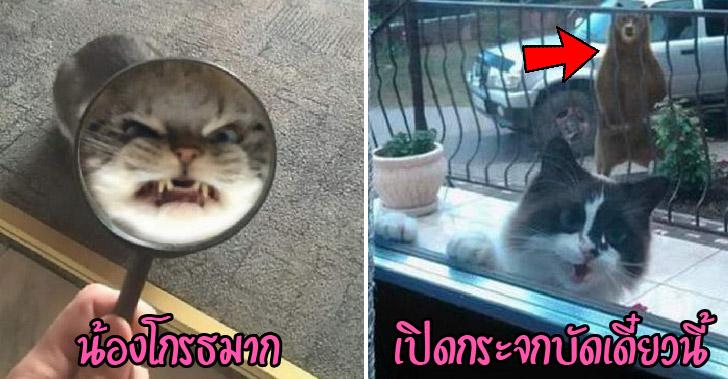 20 เหตุการณ์สุดเฮฮาของแมวเหมียว ที่สร้างรอยยิ้มได้เสมอ