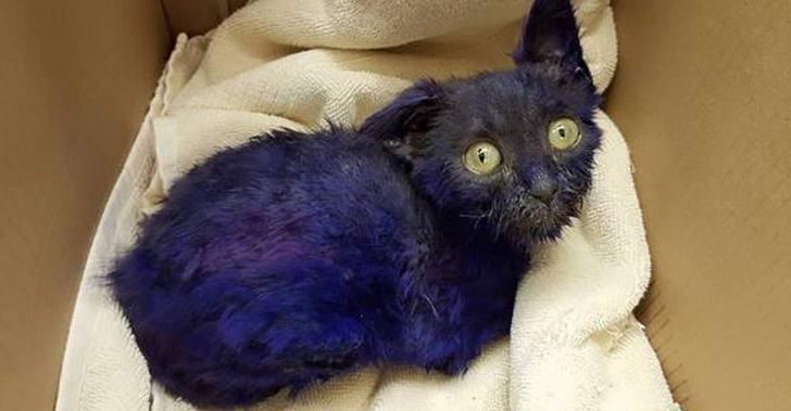 กู้ภัยสัตว์พบลูกแมวตัวม่วงริมถนน คาดว่าเป็นหนึ่งในเหยื่อของสนามประลองหมา