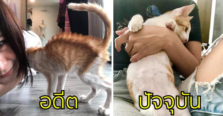 สาวช่วยชีวิตลูกแมวใกล้หมดลมในศาลพระภูมิ ชุบเลี้ยง 3 เดือน พุงพลุ้ยเกินเบอร์แล้ว