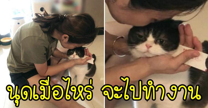 สาวบอกชอบ WFH เพราะได้อยู่กับแมวตลอด แต่สายตาน้องมองแรง เจอชาวเน็ตแซวยับ