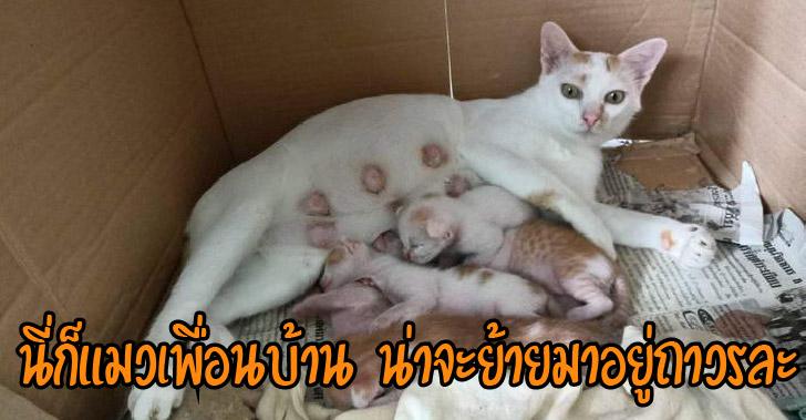อดีตแมวจร แมวเพื่อนบ้าน ที่กลายเป็นแมวเราแบบไม่ทันตั้งตัว