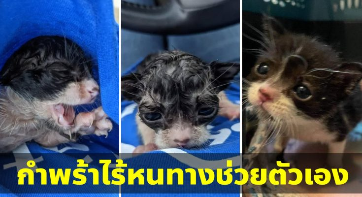 ลูกแมวตัวน้อยเปียกโชกไร้คนเหลียวแล กับโอกาสครั้งที่สองในชีวิต