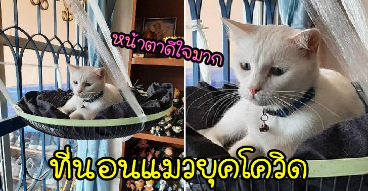 ไอเดียที่นอนแมวยุคโควิดสุดปัง ที่สร้างความเฮฮาในกลุ่มทาสแมว