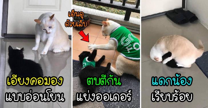 """พบกับ """"ข้าวเหนียว แมวมีม"""" ที่เอ็นดูน้องใหม่ด้วย หมัด เท้า เข่า ศอก"""