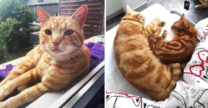 แมวเพื่อนบ้านหนีมาอยู่ด้วยนานสามเดือน หลังเจ้าของไม่เคยสนใจ ปล่อยไปตามยถากรรม