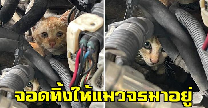 หนุ่มจอดรถทิ้งไว้ แถมเปิดห้องเครื่องส่วนตัวให้อยู่ ที่สำคัญเป็นแก๊งแมวจรด้วย